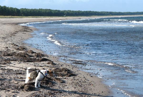 чудесный песчаный пляж на острове Рюген