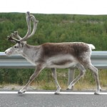 Поездка на Нордкап. День четвертый: по кривой и напрямик (Норвегия: кемпинг в районе Эвербюгд - Альта - Руссенес)