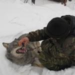 Не кричи волки!