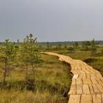 Экотропа на болоте Мох под Миорами. Ландшафтный заказник Ельня