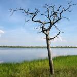 На ельненском болоте