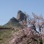 Роке Бентайга. Поселение древних канарцев