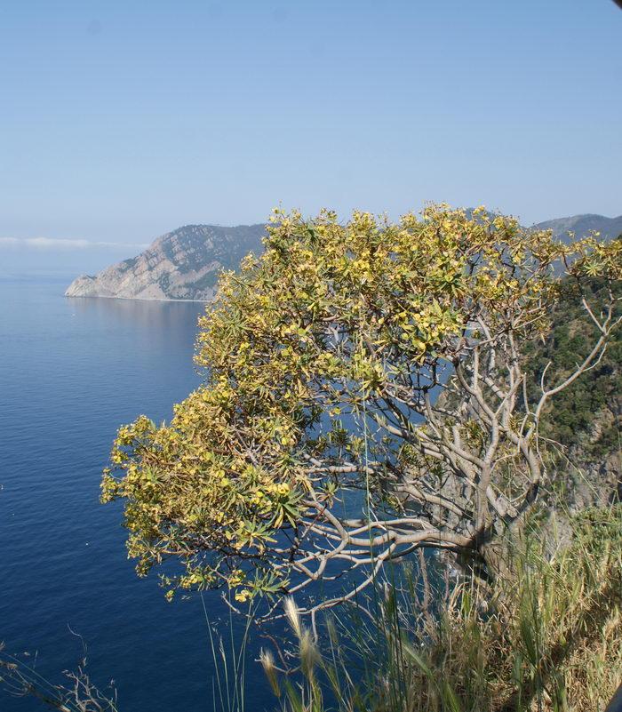 5 земель - Cinque Terre, Монтероссо ал Маре