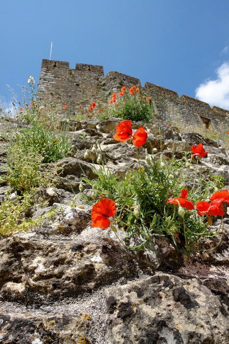 португальская флора