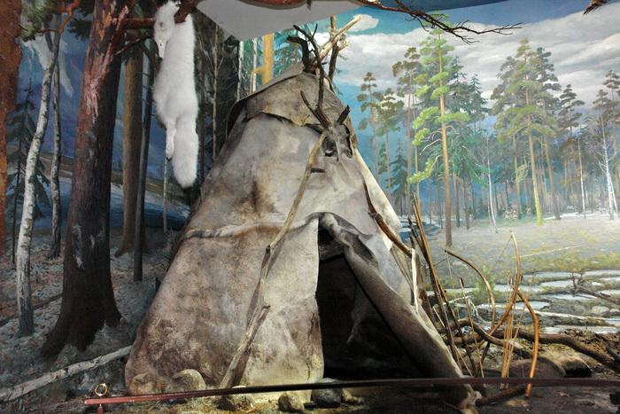 Беловежская пуща, Музей Природы. Песец