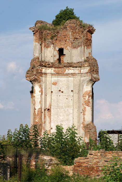 Береза Картезианский монастырь