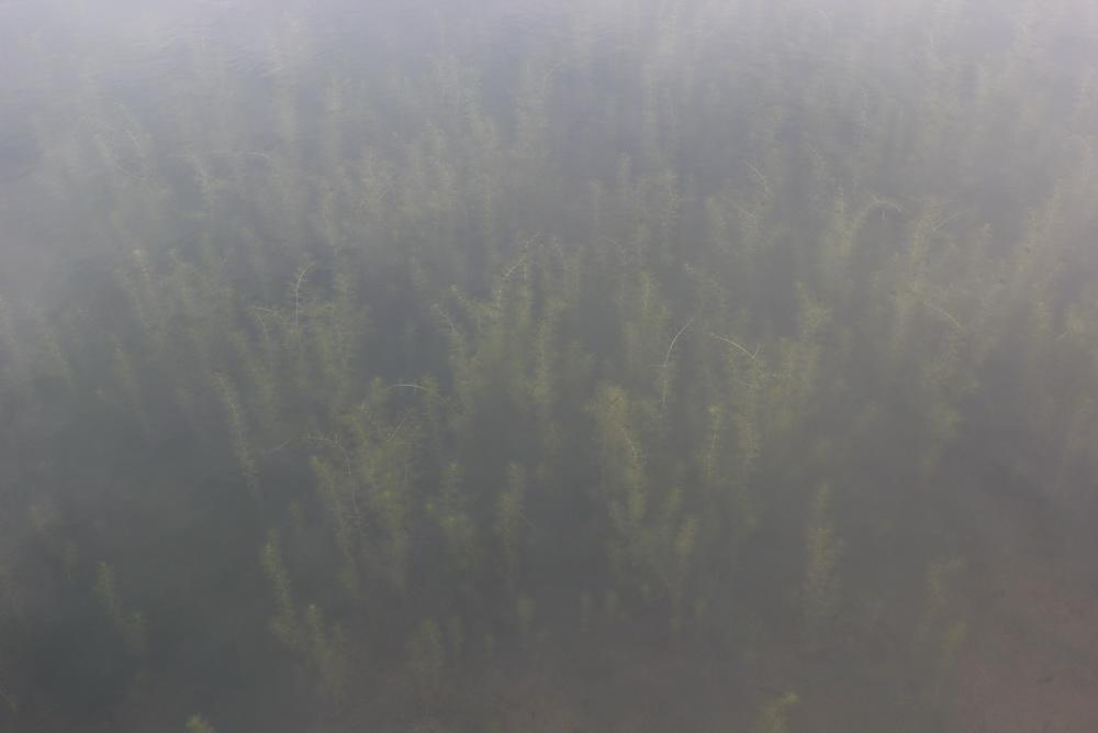 пруд в парке в Бремене