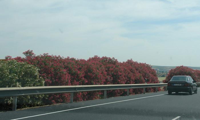 Цветущие трассы Испании