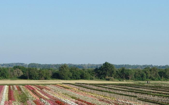 плантации риса и цветов