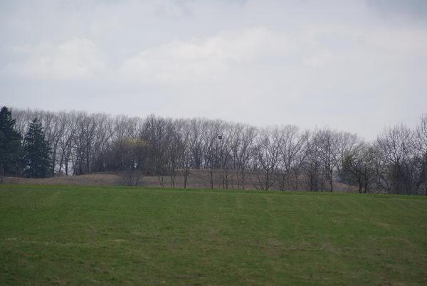 Грюнвальд поле битвы, место тевтонского обоза