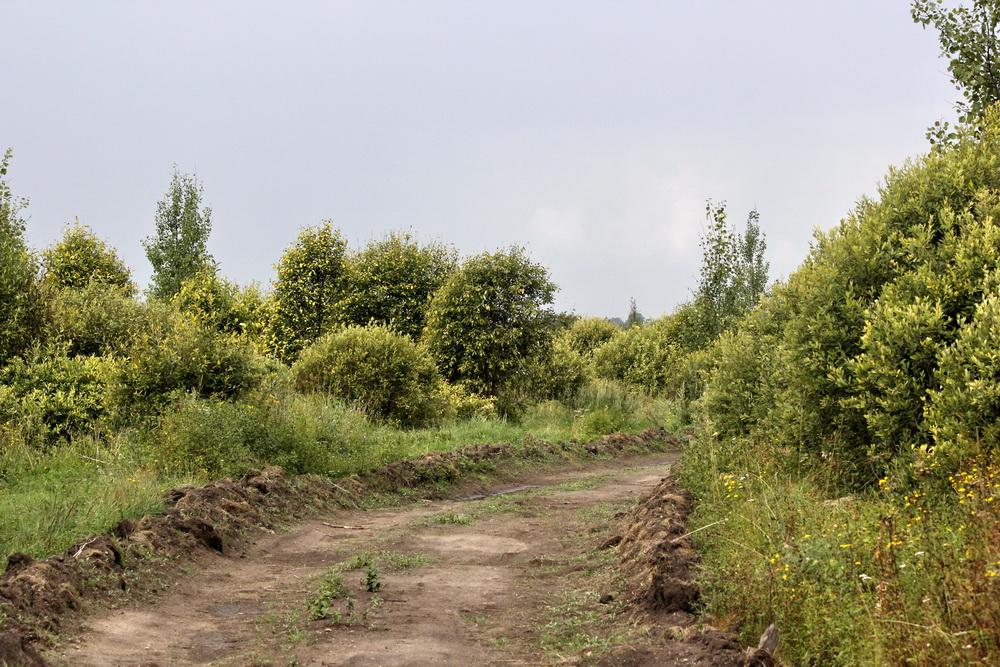 Лесная дорога до экотропы на болоте Мох