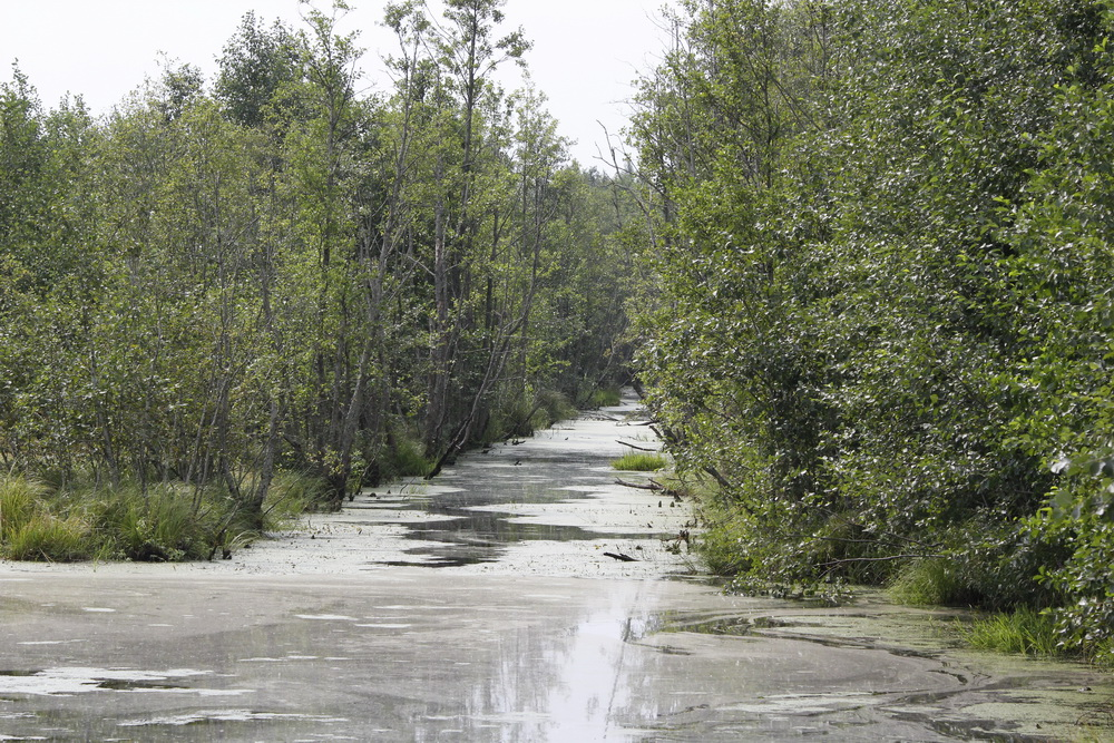 Канал на болоте Мох