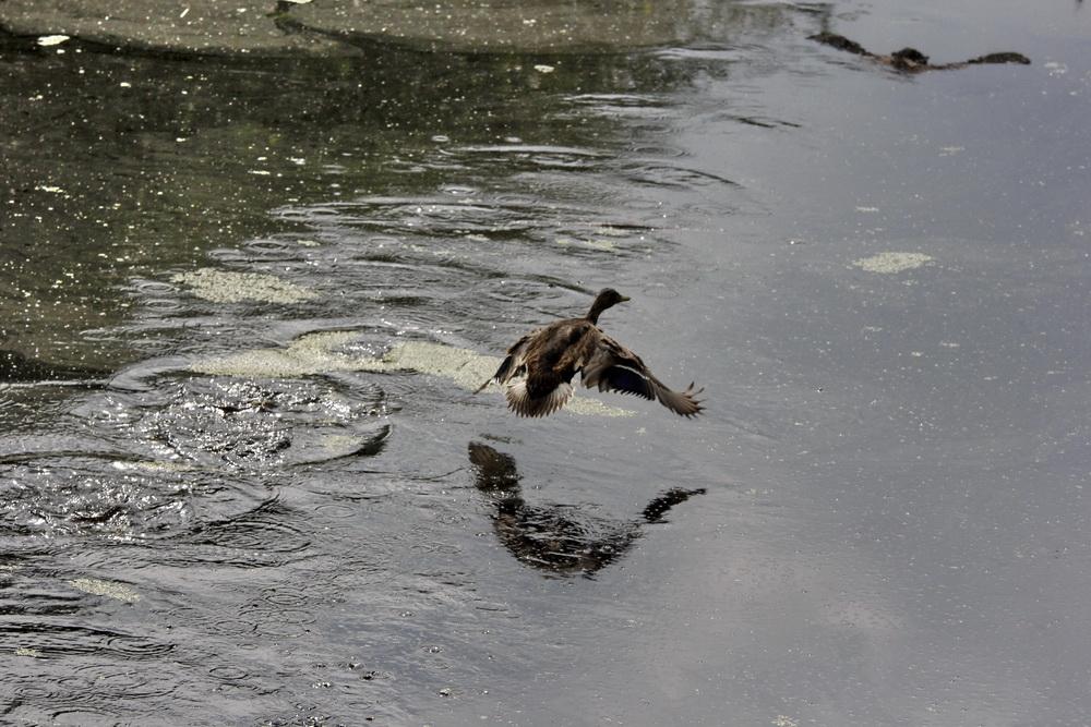 Птицы на болоте Мох