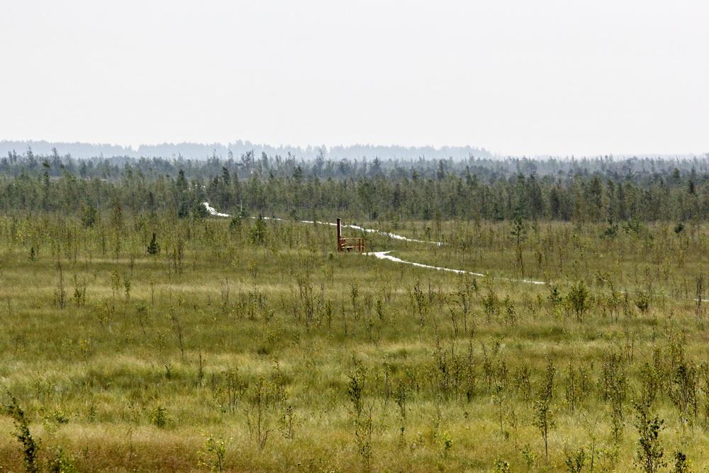Экотропа на болоте Мох