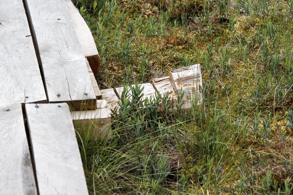 Как устроена экотропа на болоте Мох