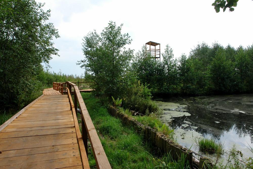 Мост на болоте Мох