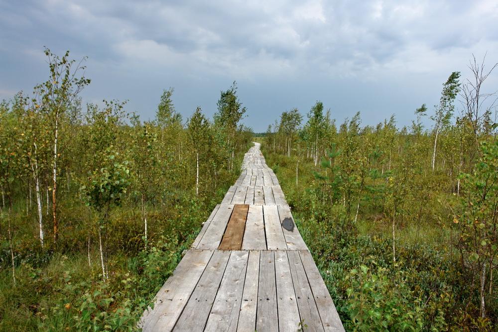 Экодорожка на болоте Мох