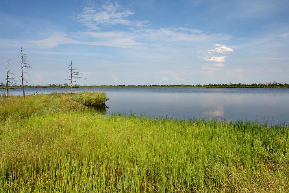 Озеро Вяликае Болото Мох
