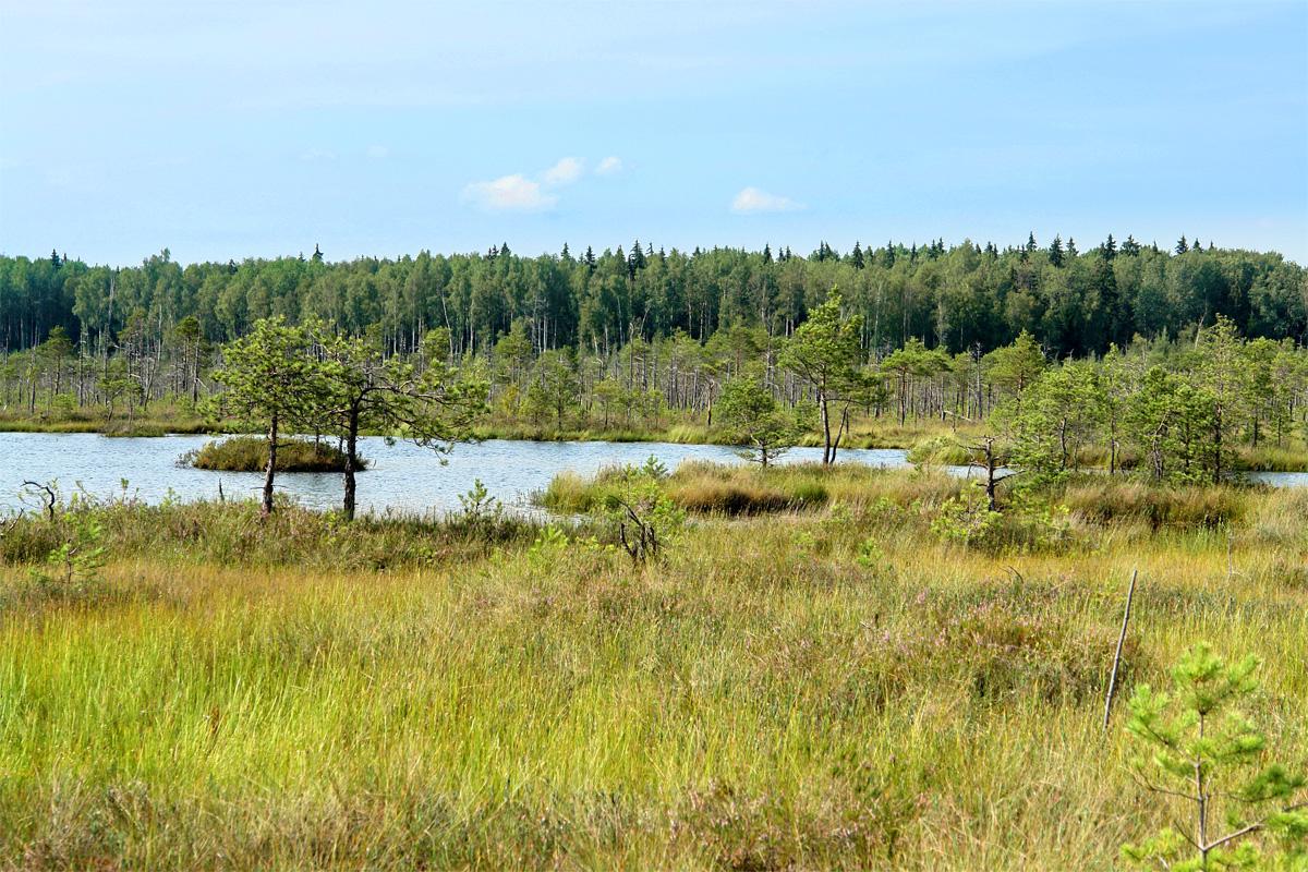 Озеро Курганистое Болото Мох