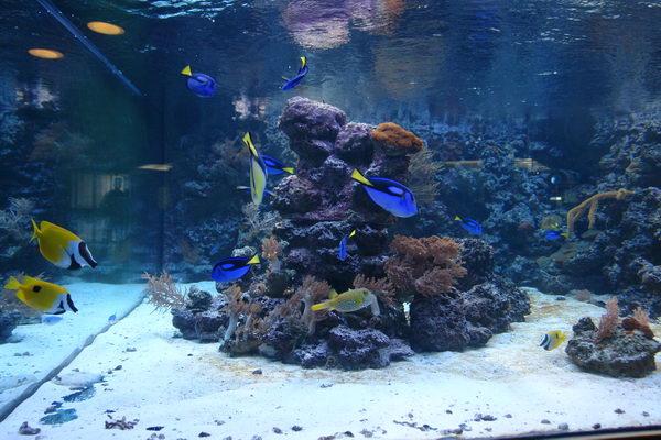 Штральзунд, Meeresmuseum, Морской музей, аквариум