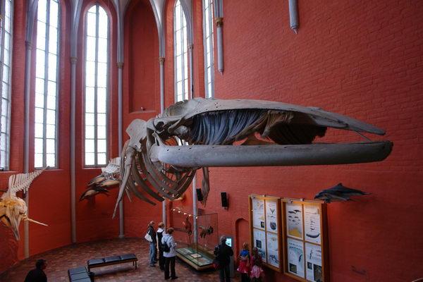 Штральзунд, Meeresmuseum, Морской музей, аквариум, скелет ФИНВАЛА