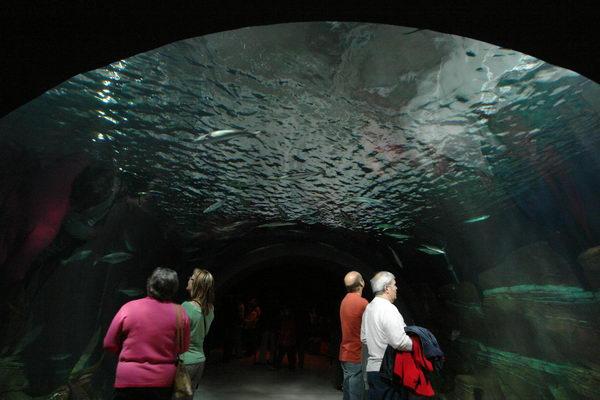Штральзунд, Ozeaneum, Океанариум, аквариум