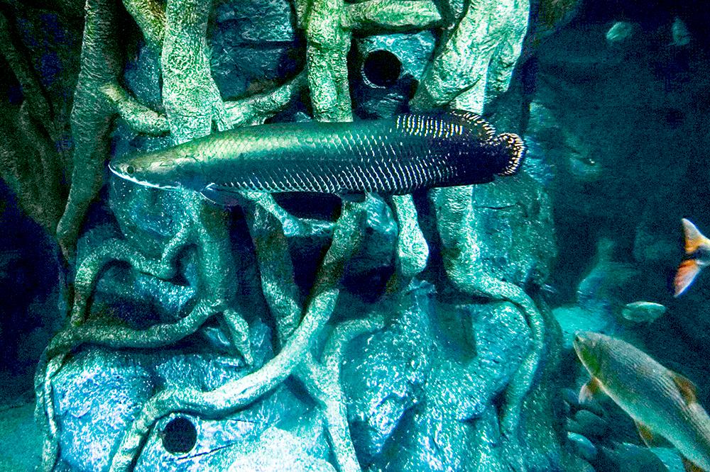 Лас Пальмас де Гран Канария: аквариум Poema Del Mar
