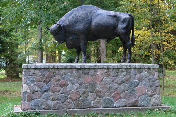 Беловежская пуща,  Охотничьи подвиги Александра II (первого императора ставшего регулярно приезжать в Пущу) увековечены бронзовой статуей зубра, которую можно увидеть по дороге из Гайнувки в Беловежу