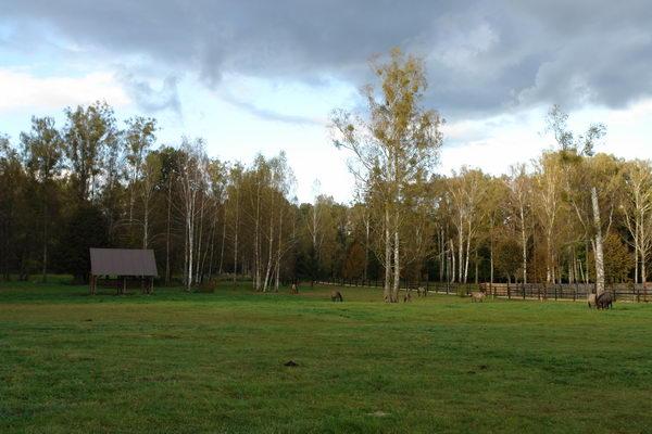 Беловежская пуща, питомник зубров, беловежские зубры