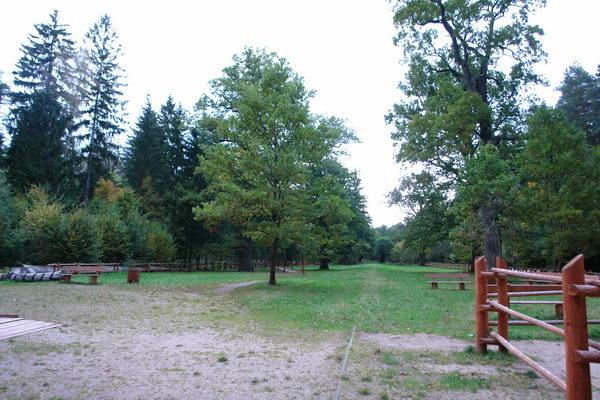 Беловежская пуща, аллея великих князей литовских и королей польских