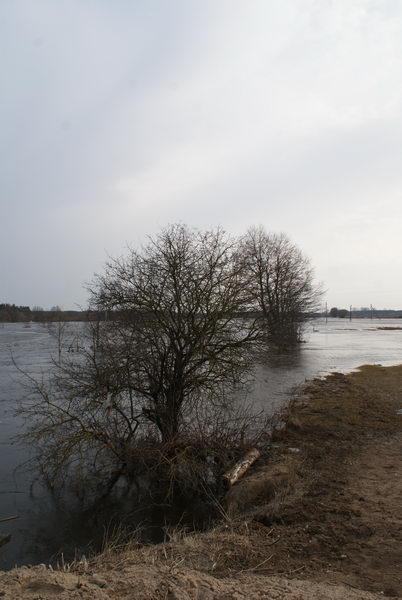Паводок в Беларуси. Разлив реки Неман. деревня Подъельники Уздзенского района