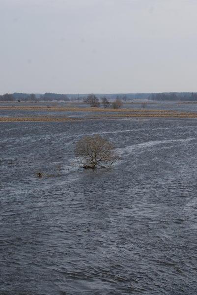 Паводок в Беларуси. Разлив реки Неман.