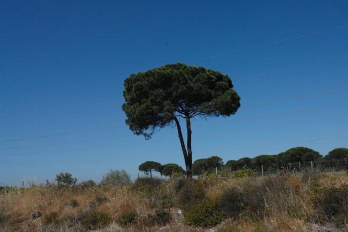 Португалия, По дороге в Альгарве