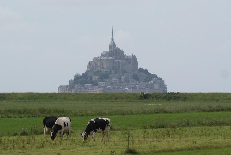 Коровы пасутся на фоне Мон-Сен-Мишель