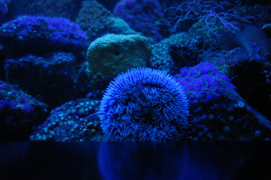 Океанополис