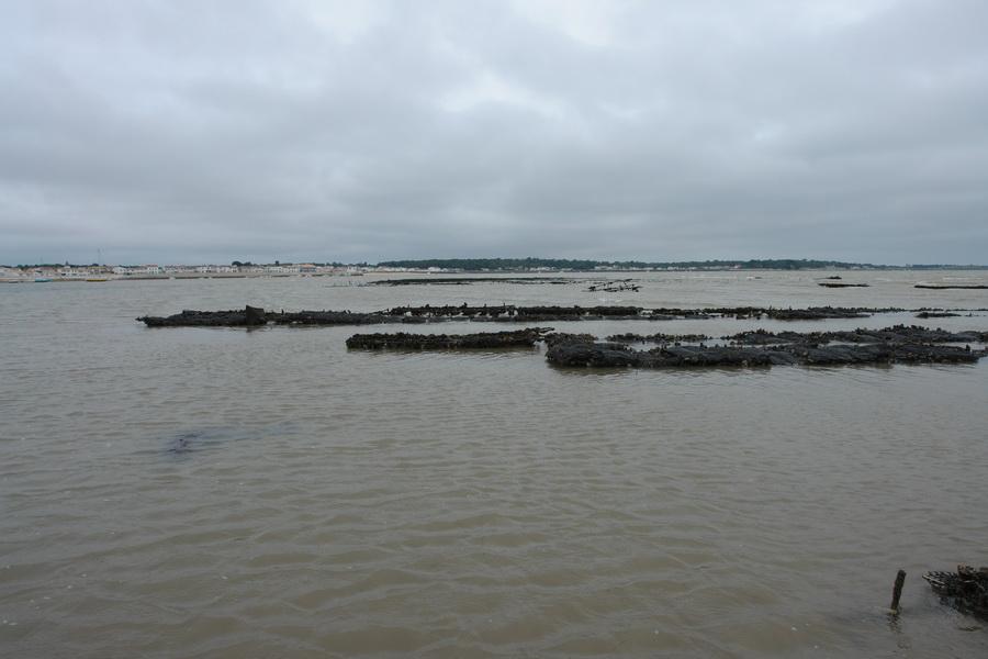 морские огороды. так выращивают устриц на острове Ре