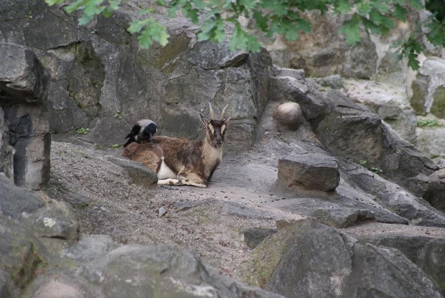 Берлинский зоопарк.