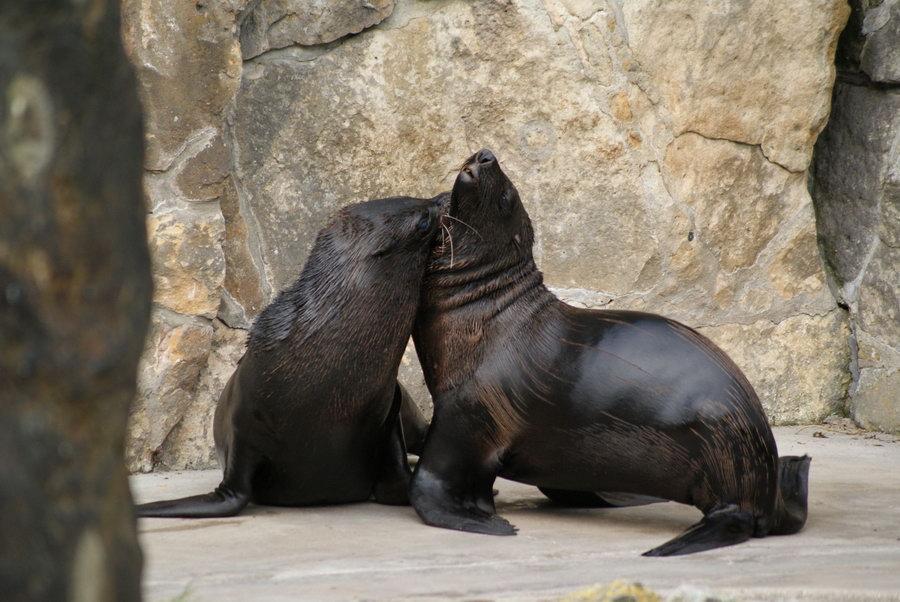 Берлинский зоопарк. Морской лев