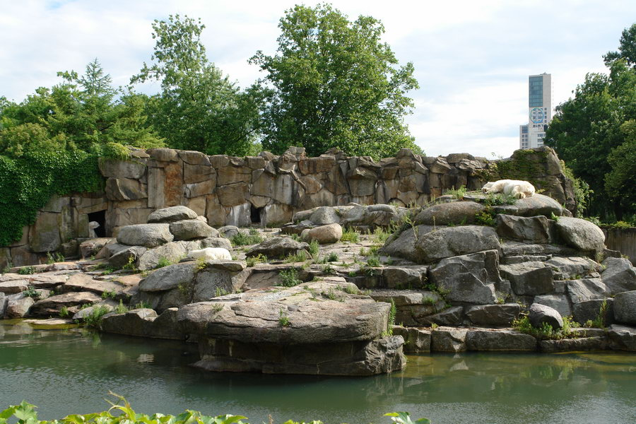 Берлинский зоопарк. Белый медведь