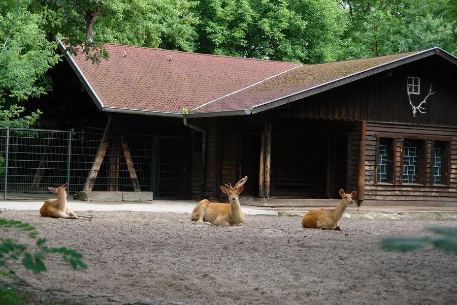 Берлинский зоопарк. Олень